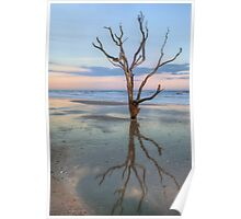 The Lonesome Tree Of Botany Bay SC Poster