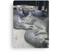 Contented Wild Kittens Canvas Print