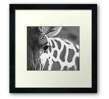 Lux Lashes II Framed Print