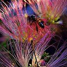 Fire Bee by Rinaldo Di Battista