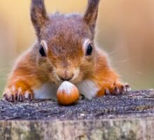 This red squirrel can't believe it's luck Sticker