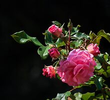 Nature's rose bouquet by Celeste Mookherjee