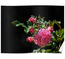 Nature's rose bouquet Poster