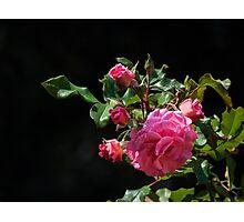 Nature's rose bouquet Photographic Print