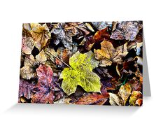 AUTUMN LEAVES - MT WILSON NSW AUSTRALIA Greeting Card