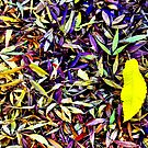 Carpet of Many Colours - Mt Wilson NSW Australia by Bev Woodman