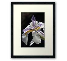 Wish on a Dream Framed Print
