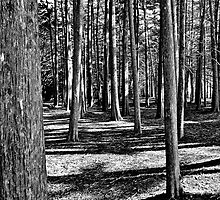 Woods Near The Pacific by Scott Johnson