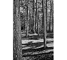 Woods Near The Pacific Photographic Print