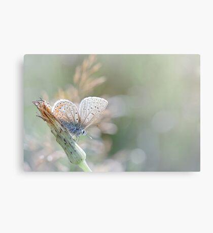 Sunbathing butterfly... (Blue version) Canvas Print
