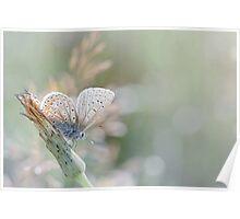 Sunbathing butterfly... (Blue version) Poster