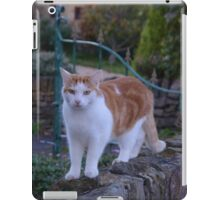 Ginger And White Cat iPad Case/Skin