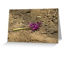 Early Purple Orchid Destruction Greeting Card