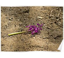 Early Purple Orchid Destruction Poster
