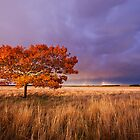 Autumn Light by JasonLStephens