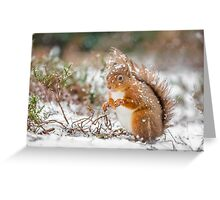 Red squirrel in snowfall Greeting Card