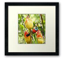 Redhot poker sunbird Framed Print