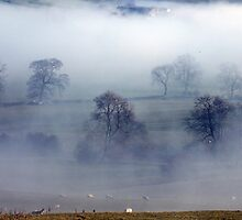 Trees In The Mist by Paul  Green
