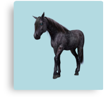 Black Horse with Blue Eyes Canvas Print