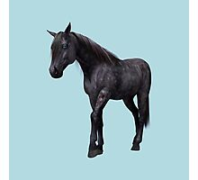 Black Horse with Blue Eyes Photographic Print