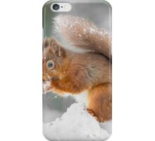 A Red Squirrel gathering food  iPhone Case/Skin