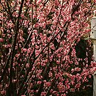 Flowering Plum and Birdhouse by Gabrielle  Lees
