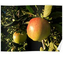 orchard is abundant . . . . Poster