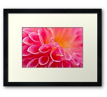 Close up of a Dahlia Framed Print