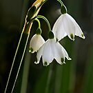 Summer Snowflake - April 2012 by cclaude