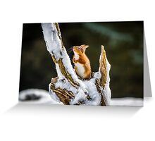 Santa please don't forget me on Christmas day Greeting Card