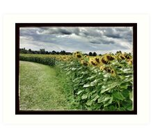 Sunflower Trail Art Print