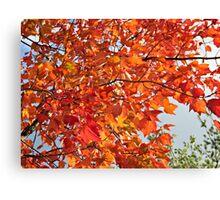 Orange Autumn Leaves 2 Canvas Print