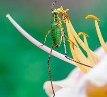 Waltz with a Flower  by Anita Pollak