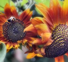 Summer Sunflowers by missmoneypenny
