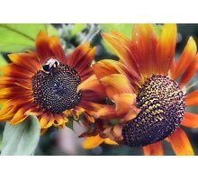 Summer Sunflowers Photographic Print