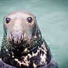 Seal by JEZ22