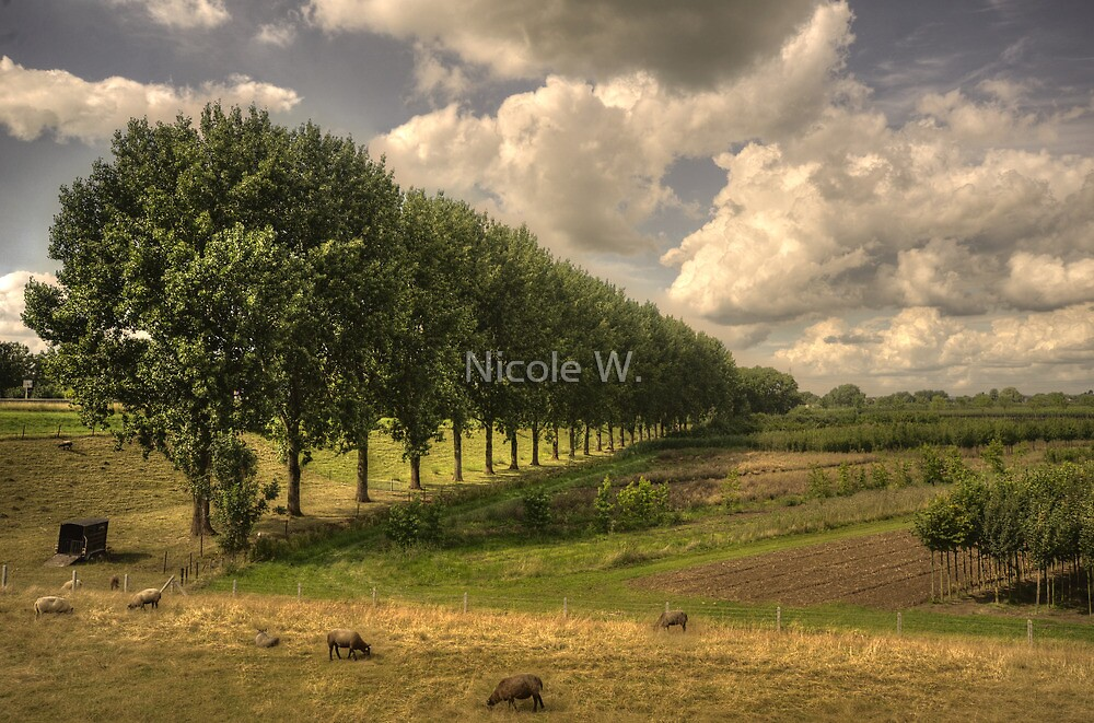 Country side by Nicole W.