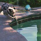 Pepper herding the pool cleaner by Sherry Cummings