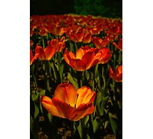 Fire Flower Photographic Print