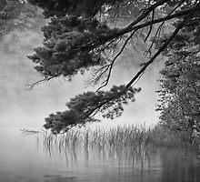 Overhanging Loon Lake by April Koehler