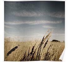 Wheat Grass Poster