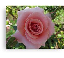 A Tournament of Rose Canvas Print