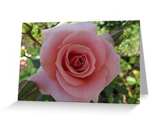 A Tournament of Rose Greeting Card
