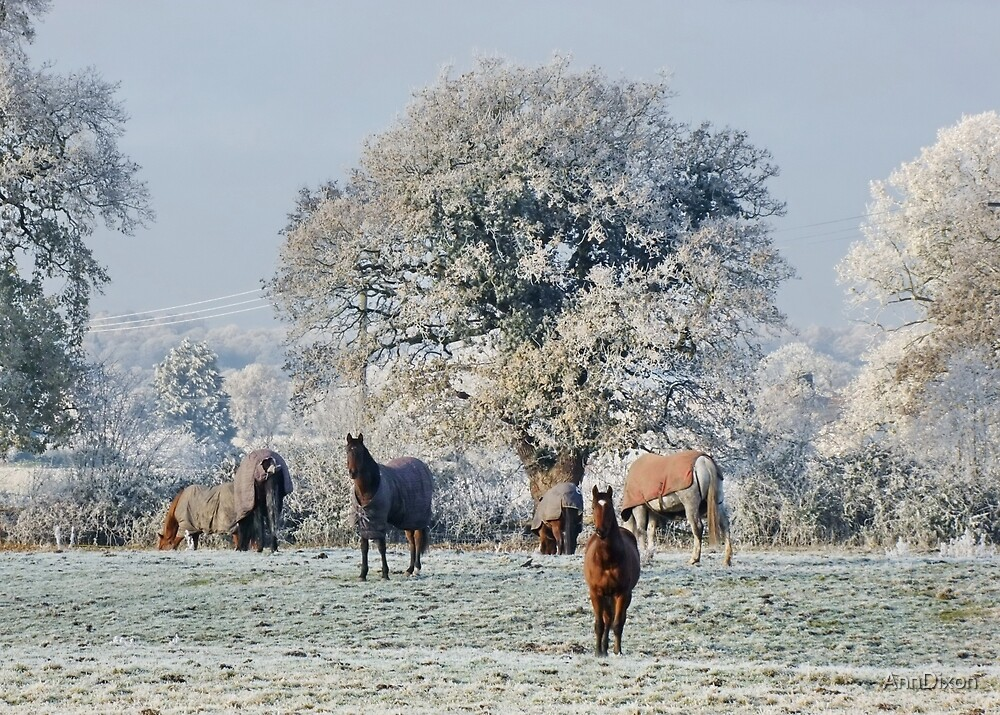 Cheshire Countryside : More Snow to come by AnnDixon