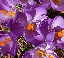spring by javier sepulveda