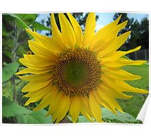 Growing sunshine Poster