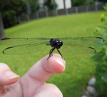 Making friends in the insect world by Sarah St. Pierre