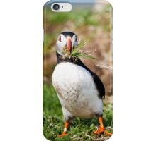 Puffin Building Nest in Scotland Treshnish Isles Vertical Print iPhone Case/Skin