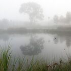 Foggy Morning by DPalmer