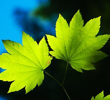 Floating Leaves by kchase